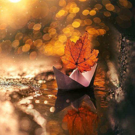 دانلود آهنگ مثل باد سرد پاییز غم لعنتی به من زد