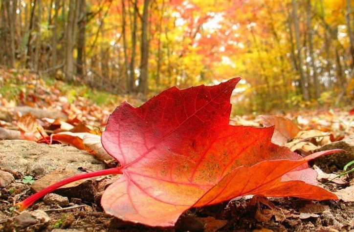 دانلود آهنگ پاییزه پاییزه تو گلخونه چشمای سیات گلریزه